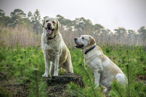 jak założyć hodowlę psów