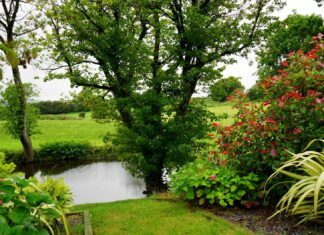 ogród jak o niego dbać