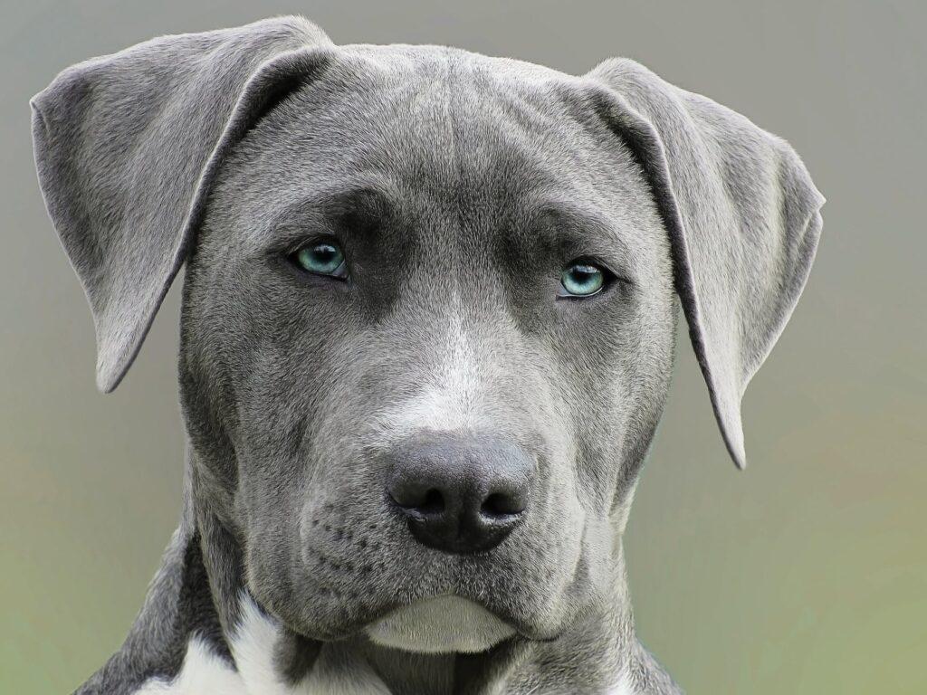 hodowca psów